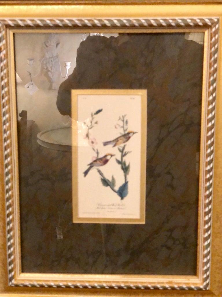 Set of Four Finely Framed Copper Engravings of Birds John James Audubon For Sale 1