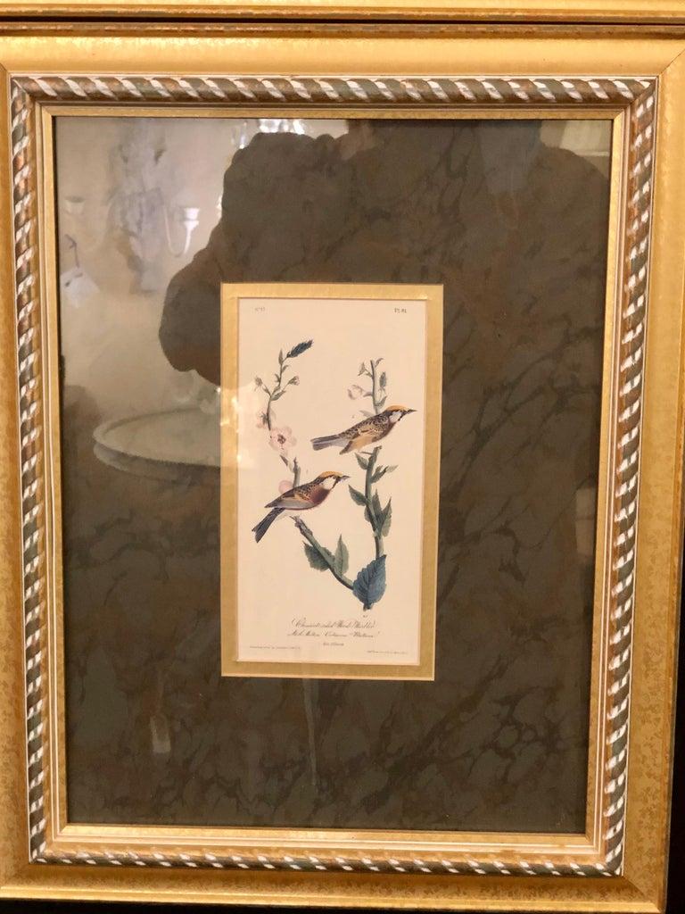 Set of Four Finely Framed Copper Engravings of Birds John James Audubon For Sale 2