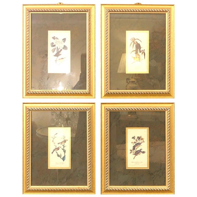 Set of Four Finely Framed Copper Engravings of Birds John James Audubon For Sale