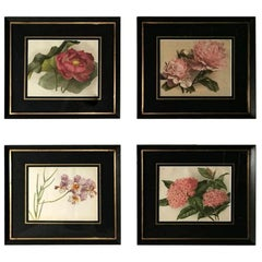 """Victorian English Set of Four Frames with """"Botanical"""" Prints 1880"""