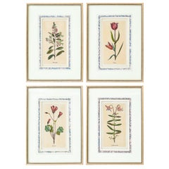 Set of Four French Botanical Prints/Engravings after Jacques De Sève
