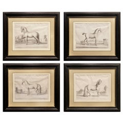 Set of Four French Engravings of Horses