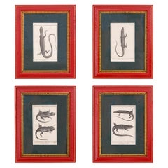 Set of Four French Lizard Engravings