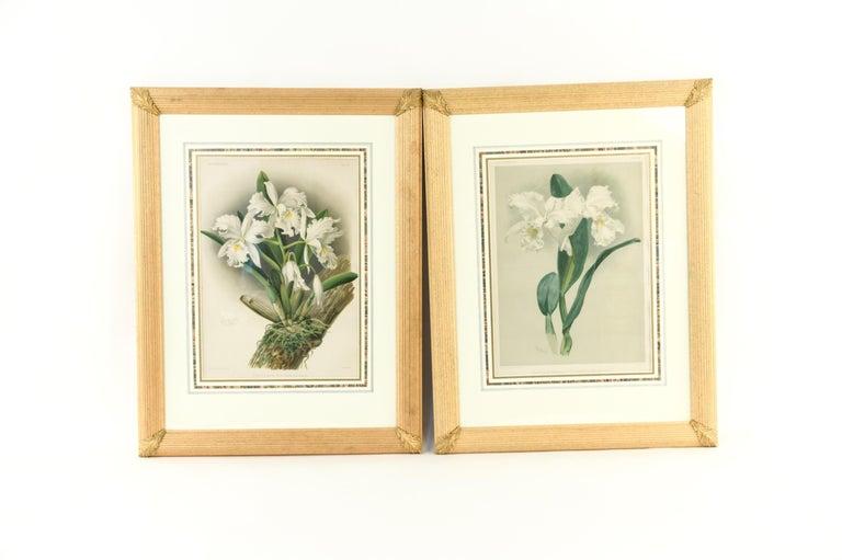 Set of four large botanical prints in custom frames. Unframed dimensions 13.5