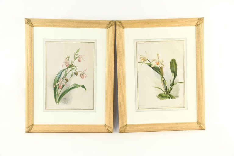 Set of Four Large Framed Botanical Prints In Good Condition For Sale In Locust Valley, NY