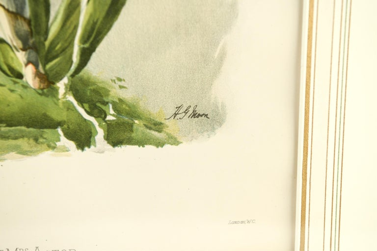 20th Century Set of Four Large Framed Botanical Prints For Sale