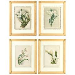 Set of Four Large Framed Botanical Prints
