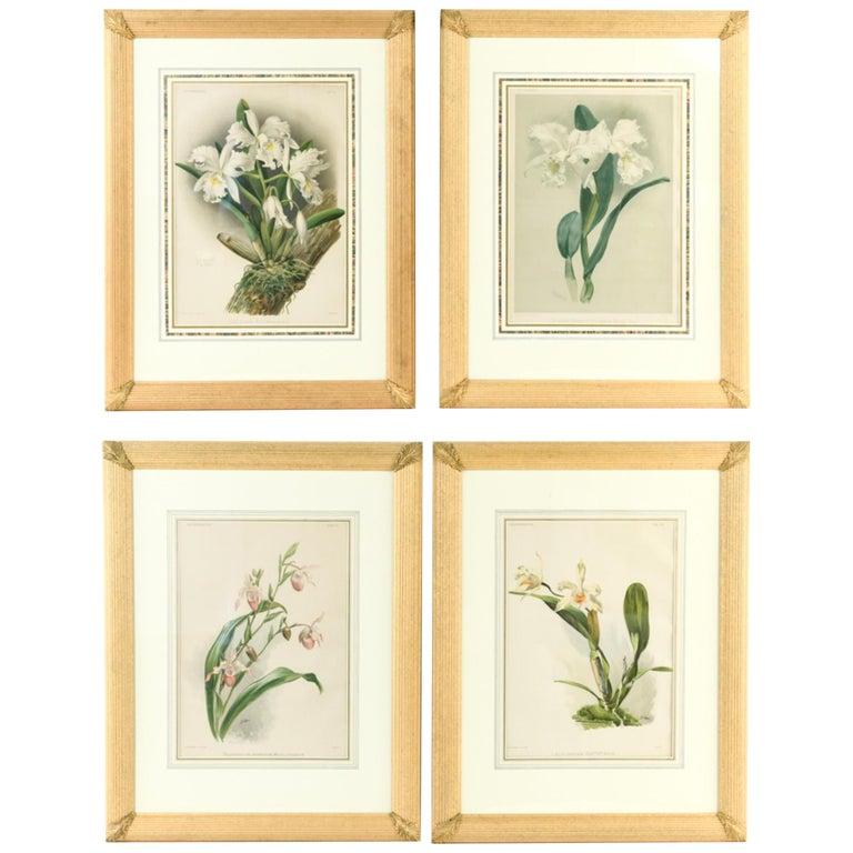 Set of Four Large Framed Botanical Prints For Sale