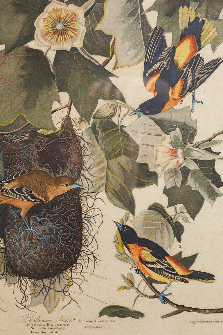 Set of Four Ornithological Prints in the style of Audubon, facsimiles, 1937 For Sale 3