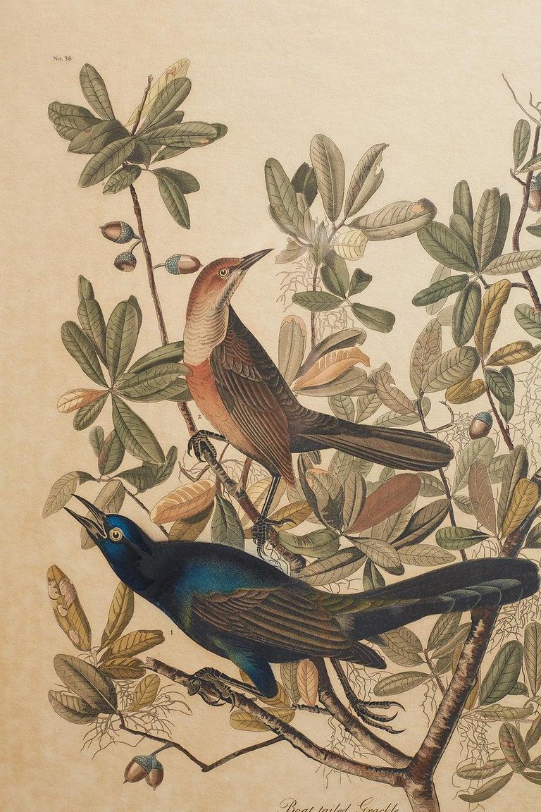 Set of Four Ornithological Prints in the style of Audubon, facsimiles, 1937 For Sale 10