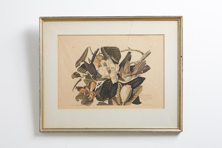Engraved Set of Four Ornithological Prints in the style of Audubon, facsimiles, 1937 For Sale