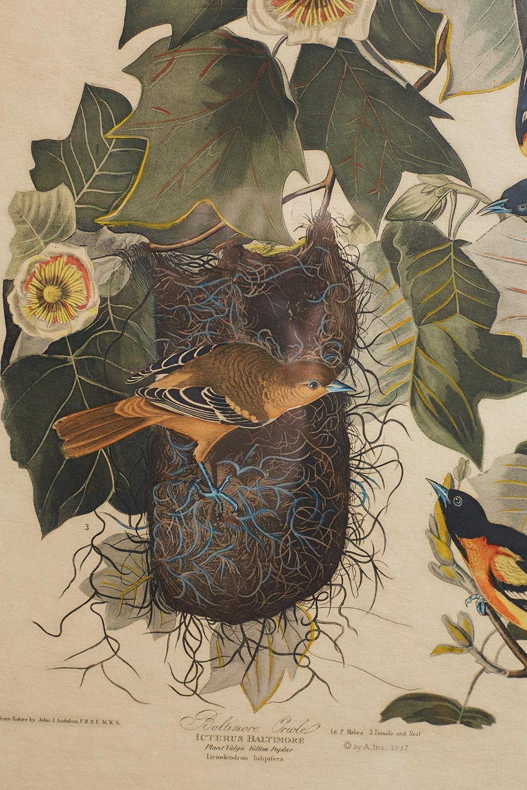 Glass Set of Four Ornithological Prints in the style of Audubon, facsimiles, 1937 For Sale