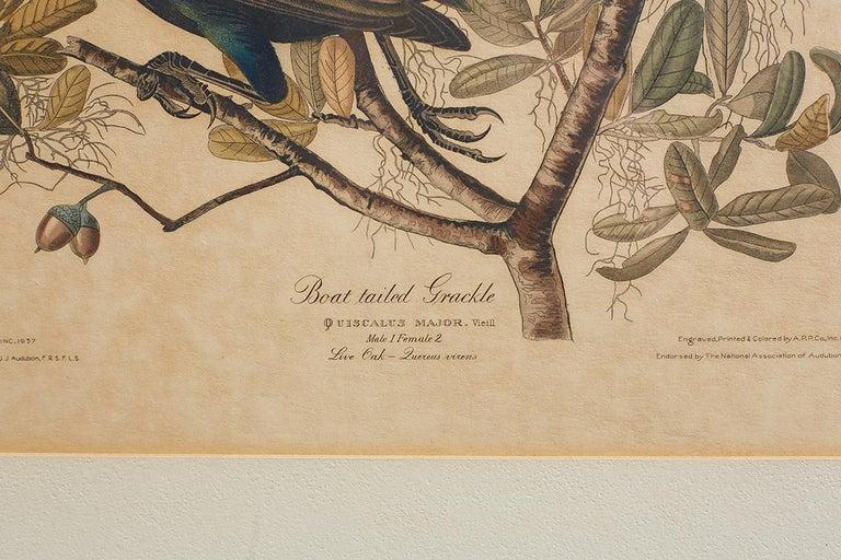 Set of Four Ornithological Prints in the style of Audubon, facsimiles, 1937 For Sale 1
