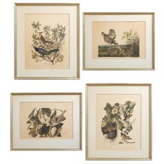 Set of Four Ornithological Prints in the style of Audubon, facsimiles, 1937