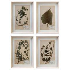 Set of Four Vintage Swedish Herbaria