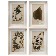 Set of Four Vintage Swedish Herbaria