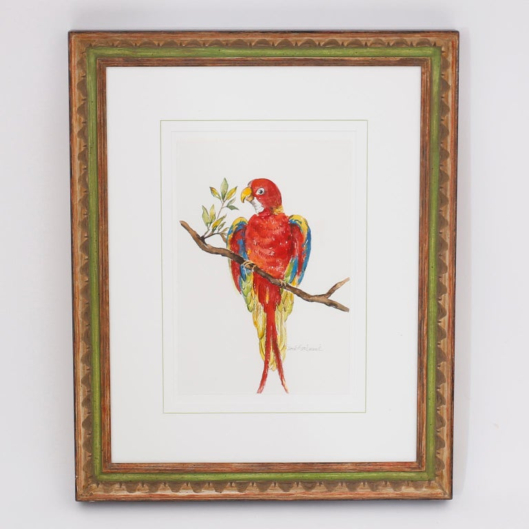 Set of Four Watercolor Paintings of Parrots In Good Condition For Sale In Palm Beach, FL