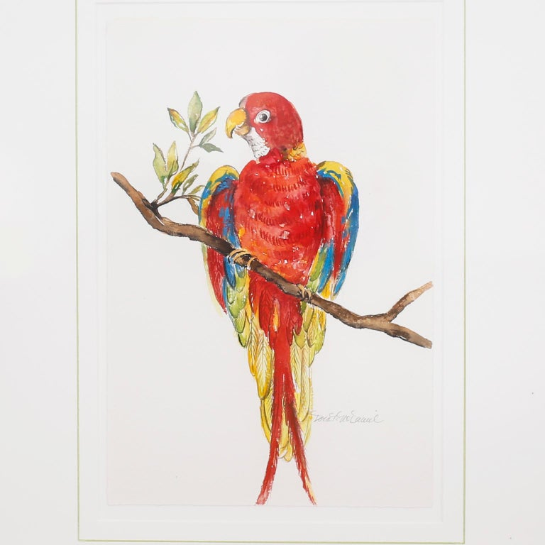 20th Century Set of Four Watercolor Paintings of Parrots For Sale