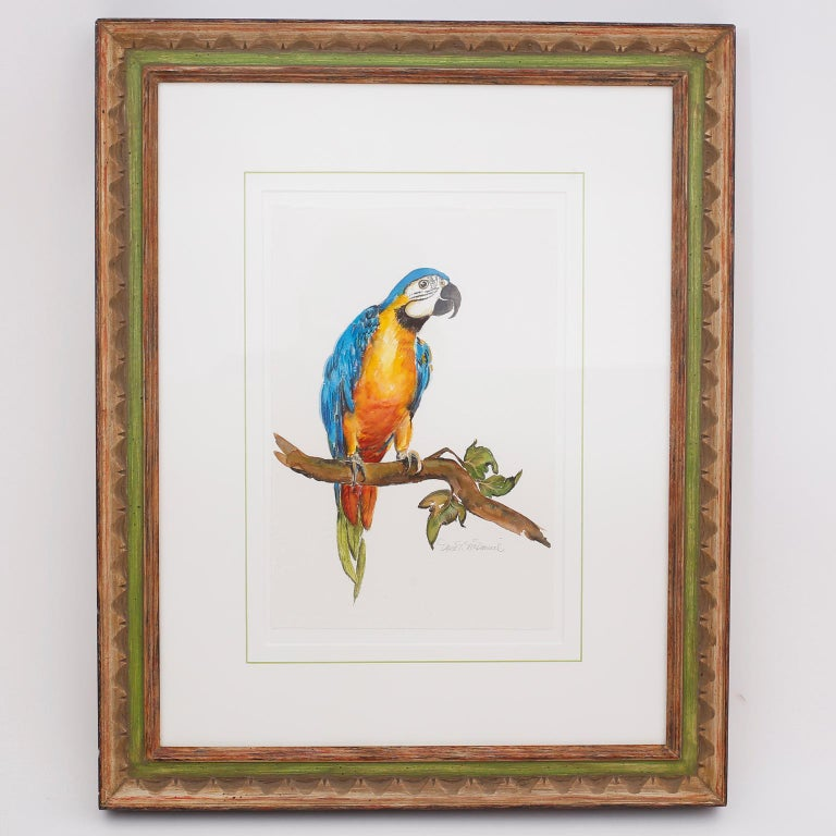 Set of Four Watercolor Paintings of Parrots For Sale 1