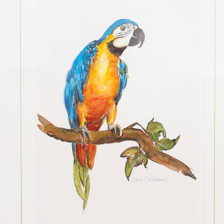 Set of Four Watercolor Paintings of Parrots For Sale 2