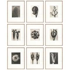 Set of 9 Karl Blossfeldt Black White Flower Photogravure Botanic Photography