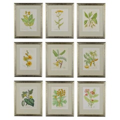 Set of Nine 18th Century 1st Edition Botanical Engravings by Woodville