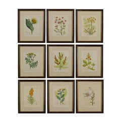 Set of Nine 18th Century Hand Colored Botanical Engravings by Woodville