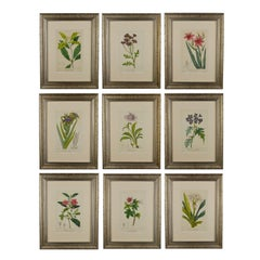 Set of Nine 19th Century Hand Coloured Engravings from Flore des Jardiniers