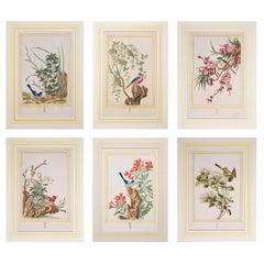 Set of Six 18th Century Hand-Colored Botanical Prints, P.J. Buchoz, 1776