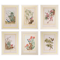 Set of Six 18th Century Hand-Colored Botanical Prints, P.J. Buchoz, 1776