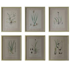 Set of Six Antique Botanical Prints in Faux Ivory Frames