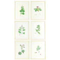 Set of Six Antique Botanical Prints in Faux Ivory Frames