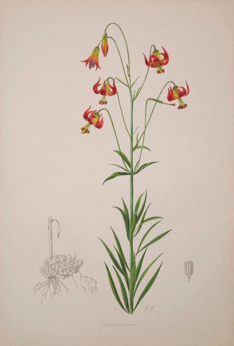 English Set of Six Antique Botanical Prints, J.H. Elwes, 1877 For Sale