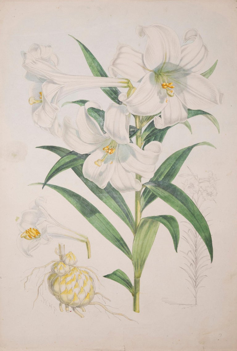 Set of Six Antique Botanical Prints, J.H. Elwes, 1877 In Good Condition For Sale In London, GB