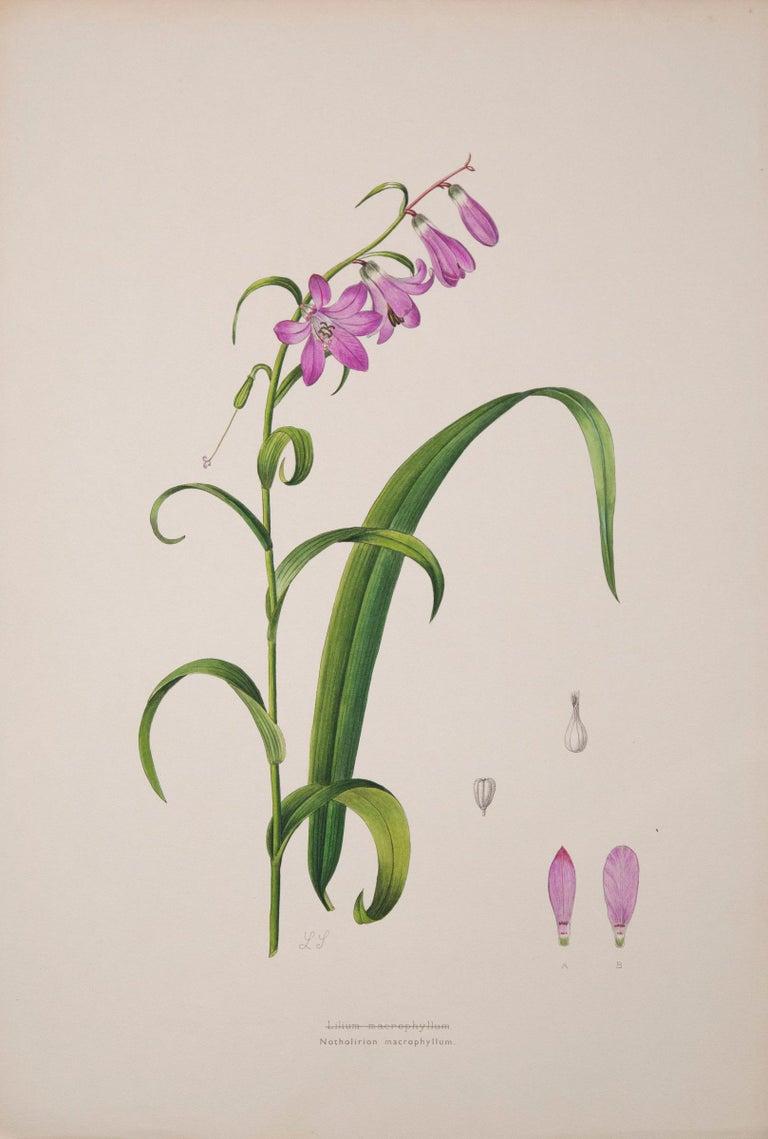 19th Century Set of Six Antique Botanical Prints, J.H. Elwes, 1877 For Sale
