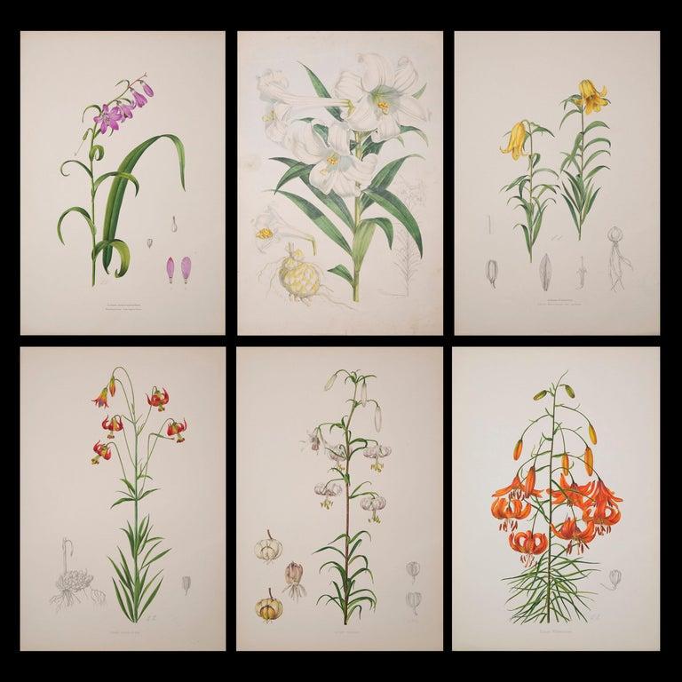 Paper Set of Six Antique Botanical Prints, J.H. Elwes, 1877 For Sale