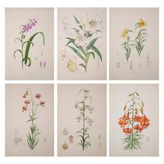 Set of Six Antique Botanical Prints, J.H. Elwes, 1877