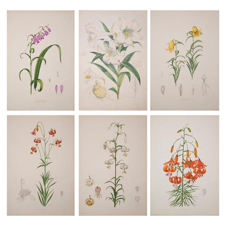 Set of Six Antique Botanical Prints, J.H. Elwes, 1877 For Sale