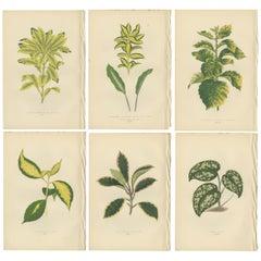 Set of six Botany Prints of Leafy Plants by Lowe, 1861