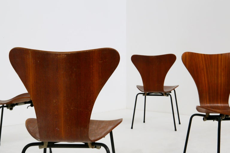 Set composed of chairs designed by Arne Jacobsen for the Brazilian airline Varig in 1950. The model of the chairs is the Butterly. The structure of the chairs is made of painted iron. The seat is made of curved wood. The chairs are called Butterfly