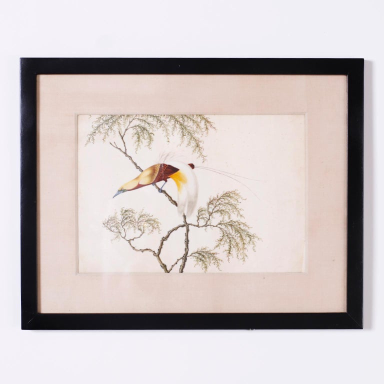 Set of six Chinese watercolors on paper of song birds in trees executed in a distinctive delicate style with bold colors. Presented in wood frames under glass.