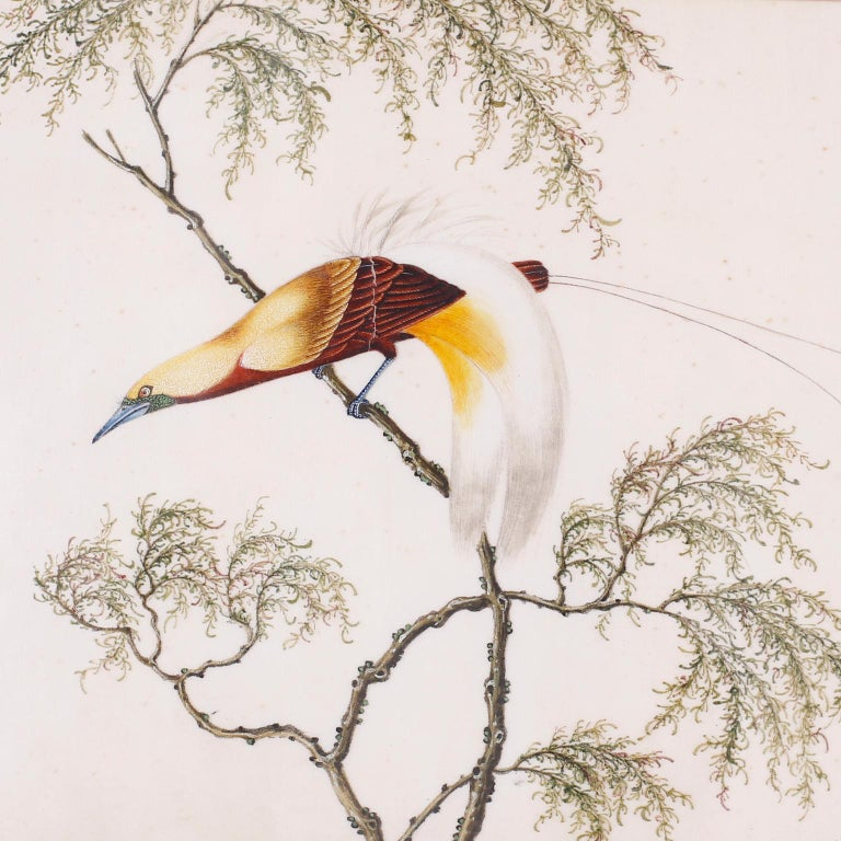 Chinese Export Set of Six Chinese Watercolors of Song Birds For Sale