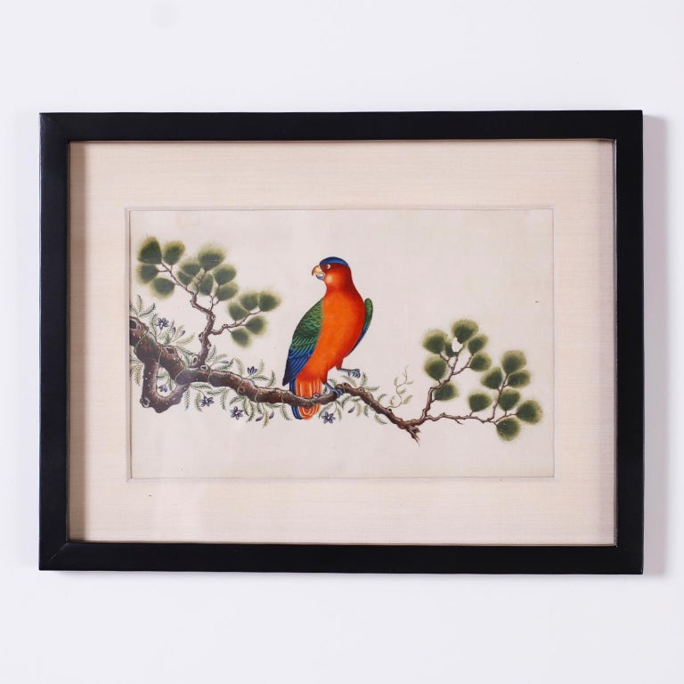 Set of Six Chinese Watercolors of Song Birds In Good Condition For Sale In Palm Beach, FL