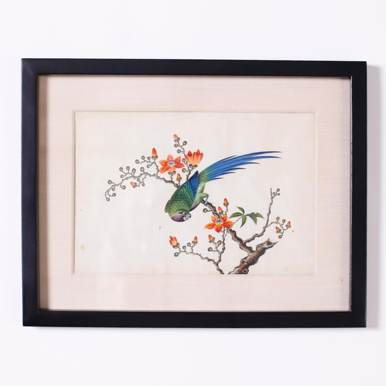 Paint Set of Six Chinese Watercolors of Song Birds For Sale