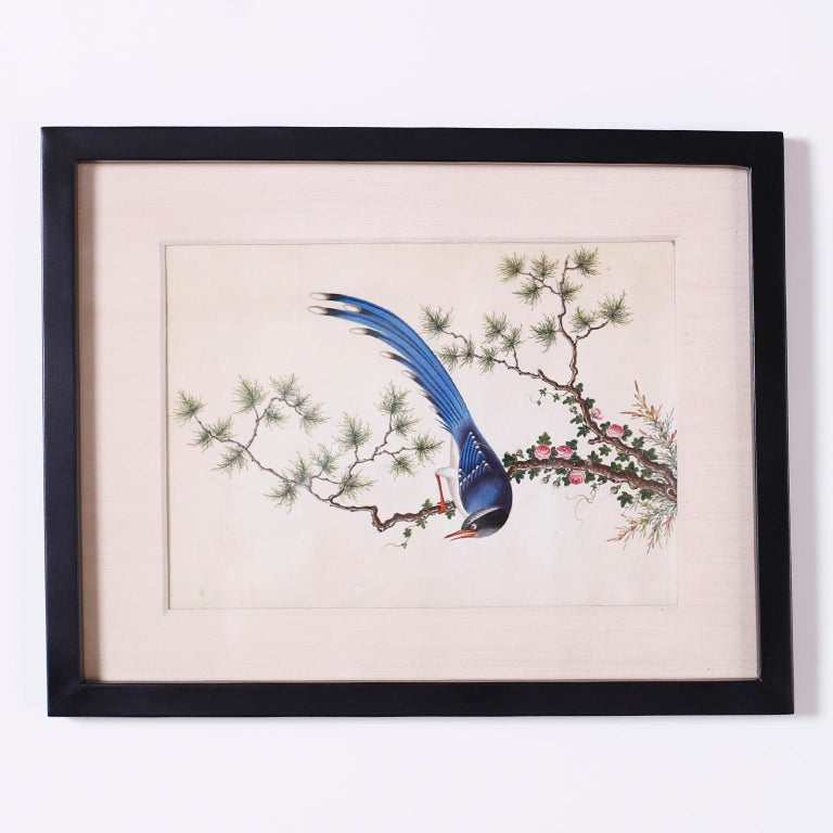 Set of Six Chinese Watercolors of Song Birds For Sale 2