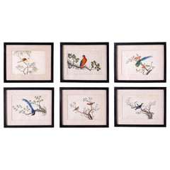 Set of Six Chinese Watercolors of Song Birds