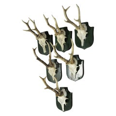 Set of Six Deer Trophies from Palace Salem, Germany