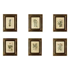 Set of Six Framed Botanicals by Duchesne-Dupin