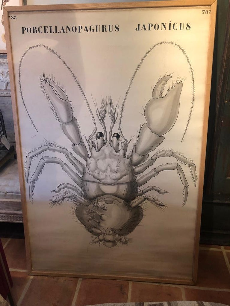 Set of Six Framed Posters for Biology Class For Sale 4