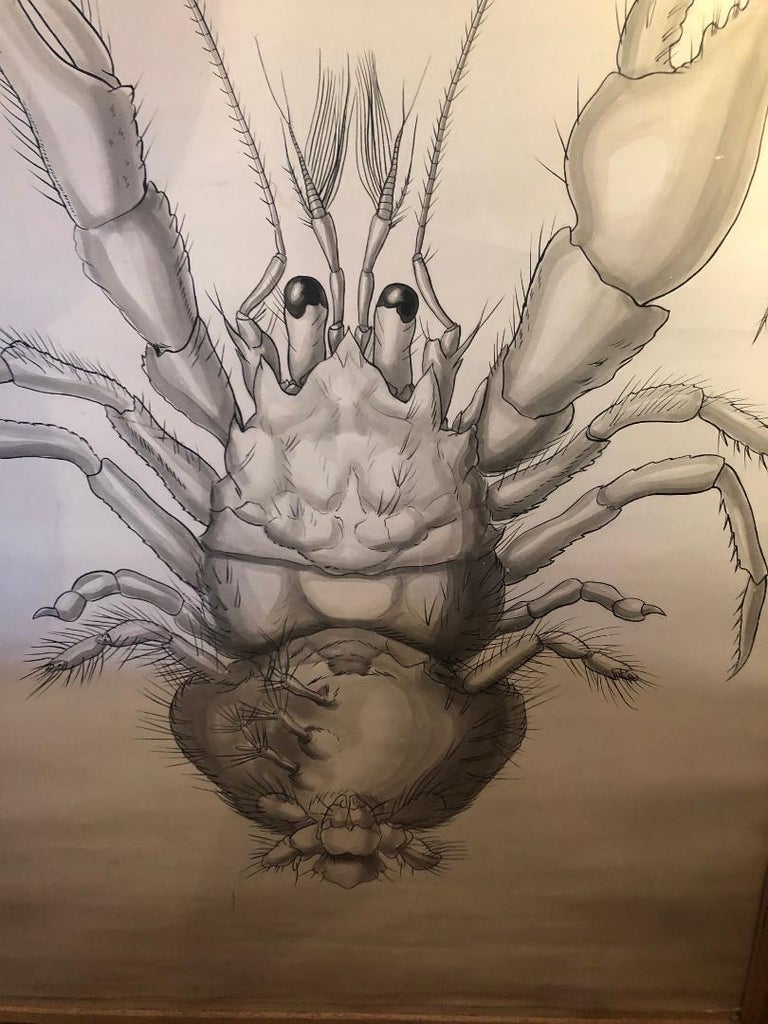 Set of Six Framed Posters for Biology Class For Sale 5